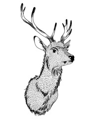 Vector illustration of Christmas deer hand drawn isolated