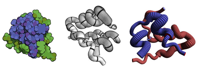 Insulin peptide hormone, chemical structure.