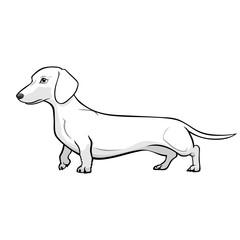 Dachshund Dog Black & White Vector Illustration