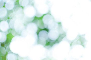 Abstract nature green and white bokeh from tree background,for background