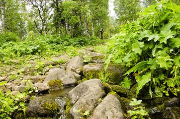 Taiga forest brook