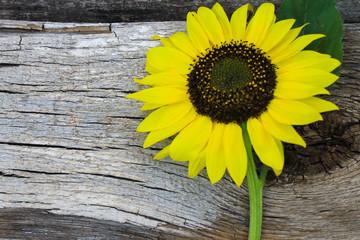 Sunflower on wooden background
