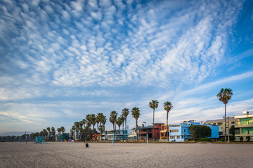 Palm trees and houses along the beach, in Venice Beach, Los Ange