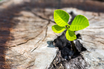 Tree on stump log - New development and renewal as a business concept