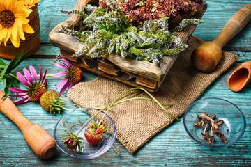 Harvest of medicinal plants Wall mural
