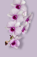 Garden Poster Orchid Flowers in the design of natural dark tones.