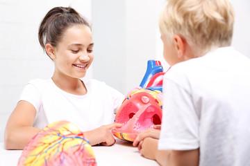 Anatomia człowieka. Dzieci oglądają model ludzkiego serca