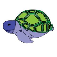 turtle sea icon cartoon design abstract illustration animal