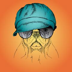 Portrait of dog in cap. Vector illustration.