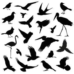 bird silhouette illustration set