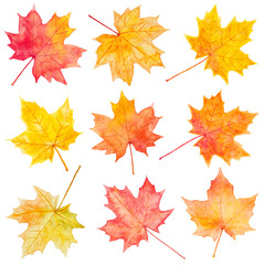 Set of watercolor autumn maple leaves.