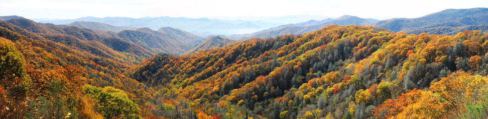 Wall Murals Mountains autumn mountain and colorful forest