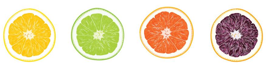 오렌지 자몽 레몬 레드 라임