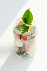 Green plant with leafs growing inside a jar full of money coins