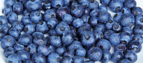 Harvest ripe blueberries