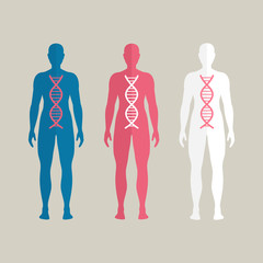 Vector Illustration of Human DNA