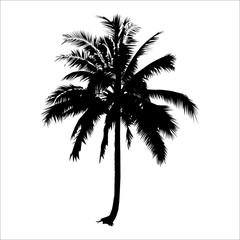 silhouette coconut tree. vector logo design. isolated natural