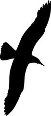 Silhouette of flying gull