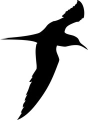 Silhouette of flying gull