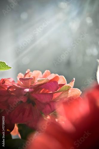 Ксения сябитова и андрей свадьба фото