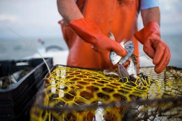 Pamlico Crabbing