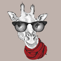 Portrait of giraffe  in a winter scarf. Vector illustration