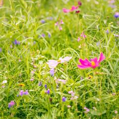 Naturbelassene Blumenwiese