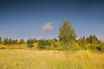 morning meadow at sunrise with birch tree in the foreground near the town Kadan in Czech republic