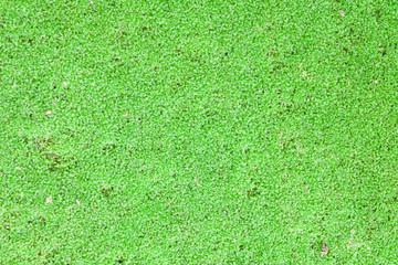 Green field from moss background close up.