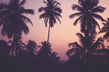 Coconut palm trees at sunrise vintage filter