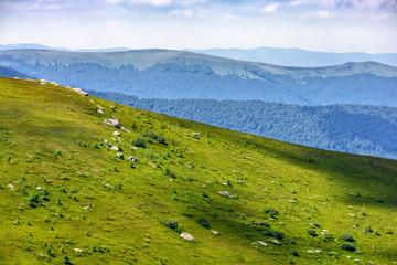 hillside meadow in mountain