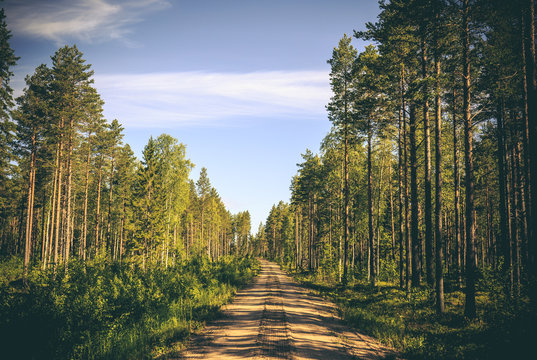 An empty sandy dirt road runs through the forest with big pine trees on both sides. Shadows fall on the ground. Location: Northern Sweden, Scandinavia (Pitea, norrbotten).