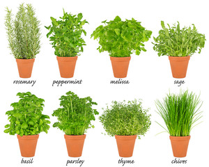 collection set of herbs in pots / Reihe von Küchenkräuter Kräuter Pflanzen im Topf