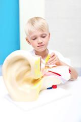 Zdolne dziecko. Chłopiec składa model ucha