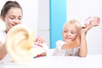 Narząd słuchu, budowa ucha. Dzieci oglądają model ludzkiego ucha.