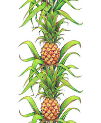 Pineapple with green leaves tropical fruit growing in a farm. Pineapple drawing markers seamless pattern vertical frame border isolated on a white background. Colour illustration for design. Handwork