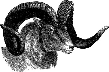 Vintage clipart mountain goat