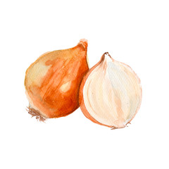 Onion. Isolated. Watercolor illustration.