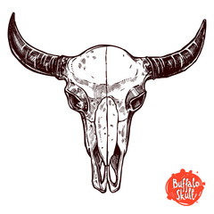 Buffalo Skull Hand Drawn Sketch