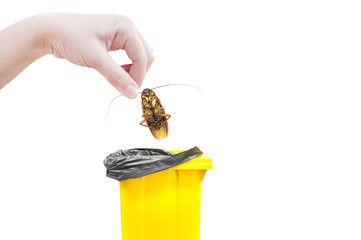 Hand holding brown cockroach and bin yellow Isolated on a white background,Cockroaches as carriers of disease