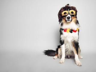 lustiger Hund mit Brille
