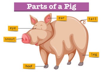 Diagram showing parts of pig
