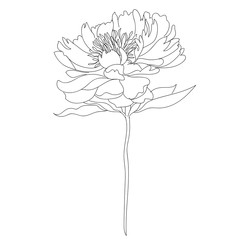 Graphical black and white flower. Vector.