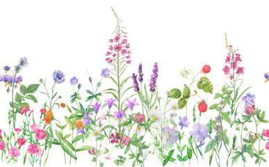 Panoramic view of wild meadow flowers and grass on white background, horizontal pattern, watercolor painting, realistic illustration