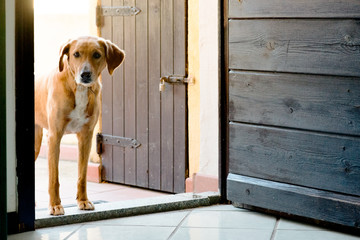 dog waiting at the housedoor