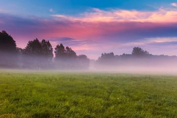 Wild foggy meadow landscape