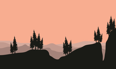 Silhouette of spruce in cliff