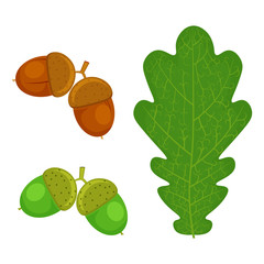 Oak leaf and Acorn vector illustration isolated on white background