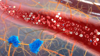 inside the blood vessel, white blood cells inside the blood vess