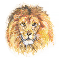 Isolated watercolor lion head. African predator and exotic animal. Colorful art.
